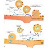 botox para distonia
