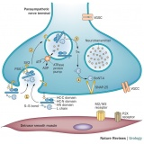 toxina botulínica para espasticidade Cursino