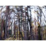 acupuntura para labirintite Parque Ibirapuera