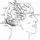 onde encontrar tratamento para dor com craniopuntura Aeroporto