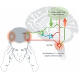 quanto custa acupuntura para dor de cabeça tensional Campo Belo